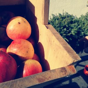 Äpfel beim rebeln