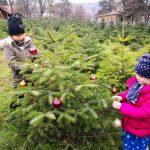 Celine und Luisa beim dekorieren eines kleinen Weihnachtsbaumes in der Plantage.